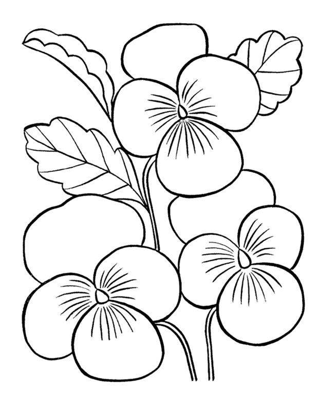 desenhos de flores para adultos e crianças imprimir colorir e pintar